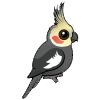 Małe papugi