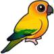 Średnie papugi